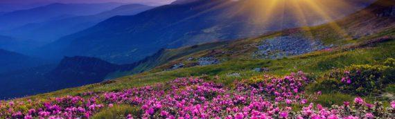 The Healing Revolution: Onward & Upward